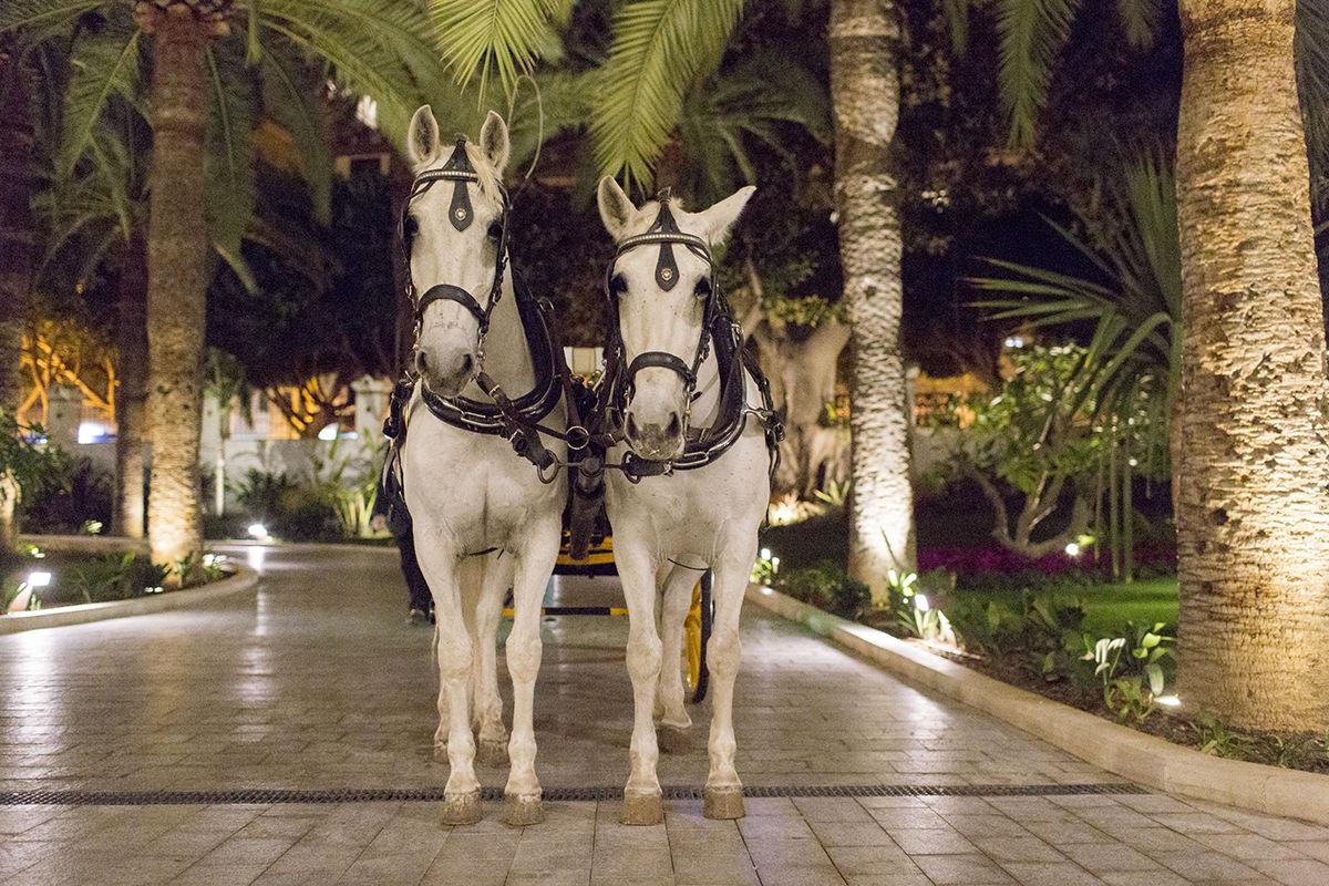 Wedding Spain horse car